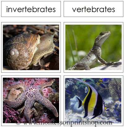 Vertebrate and Invertebrate Cards - Printable Montessori Animal Materials for Montessori Learning at home and school.  $3.89