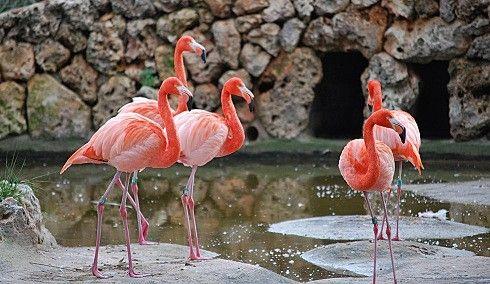 Safari Zoo, Cala Millor