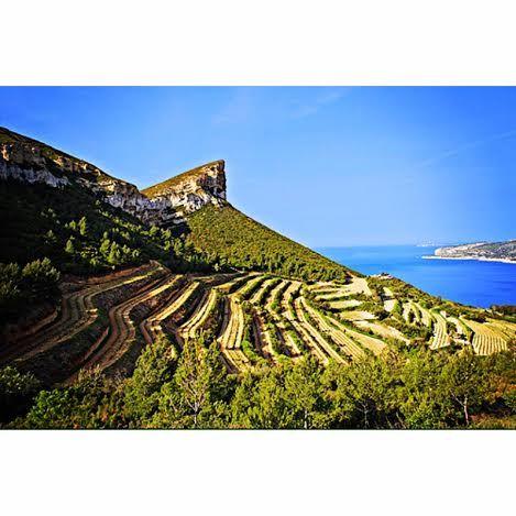 Vignoble de provence France, sea, sun, vineyard, visits, holidays https://instagram.com/winetourbooking/
