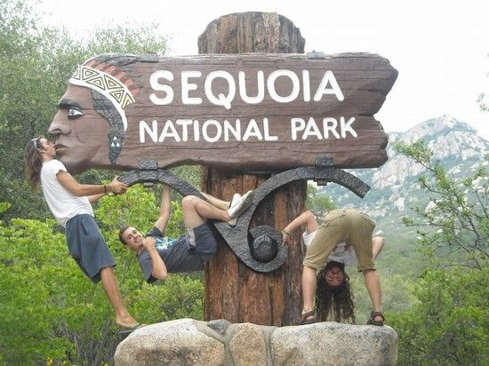 sequoia park - Cerca con Google
