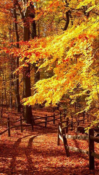 I Love Autumn - Comunidade - Google+