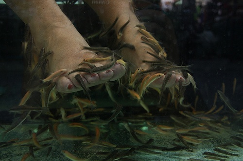 25 best ideas about fish pedicure on pinterest for Fish eating dead skin pedicure