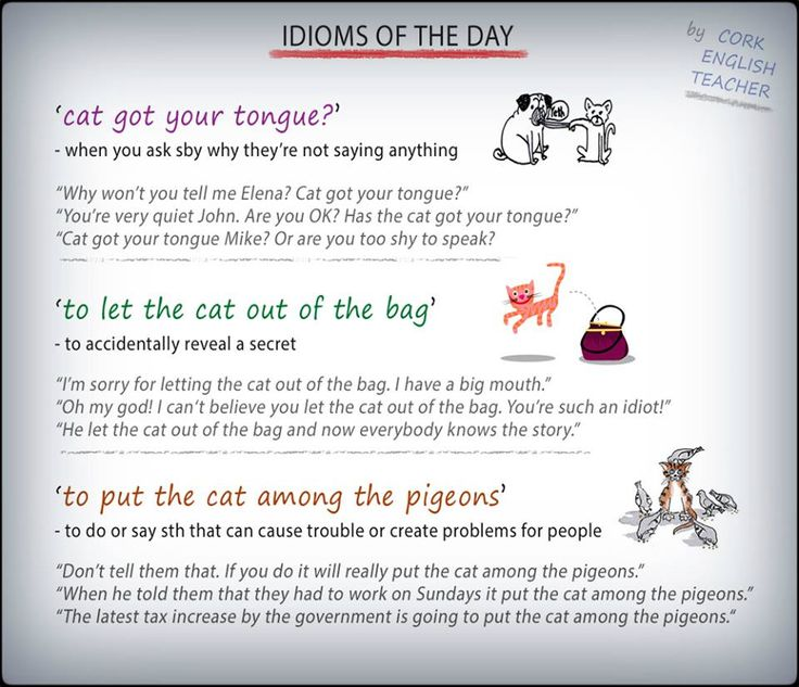 Cat Idioms – Daily Motivational Quotes