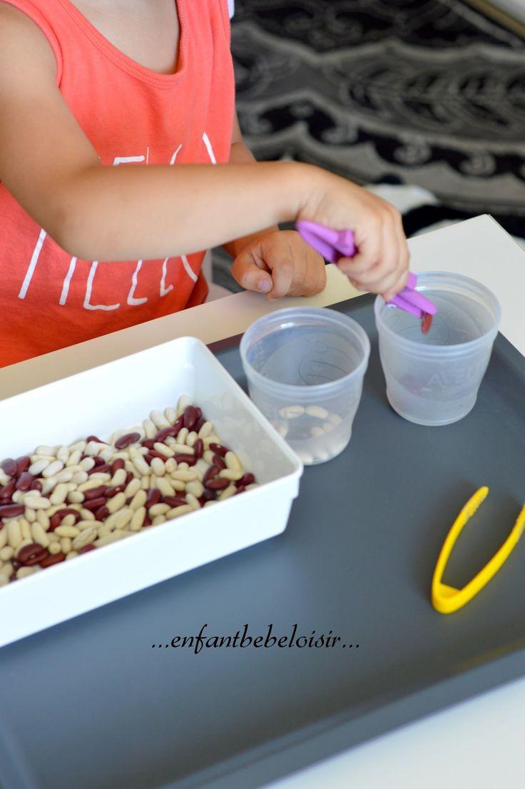 Hello ! Une idée de plateau - atelier Autonome d'inspiration Montessori - tri de graines ( haricots blancs et haricots rouge) - bon Atelier !!