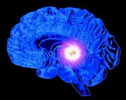Υπόφυση Εγκεφάλου – Όλη η Αλήθεια. Σας ενδιαφέρει   Η υπόφυση, είναι ένας αδένας…