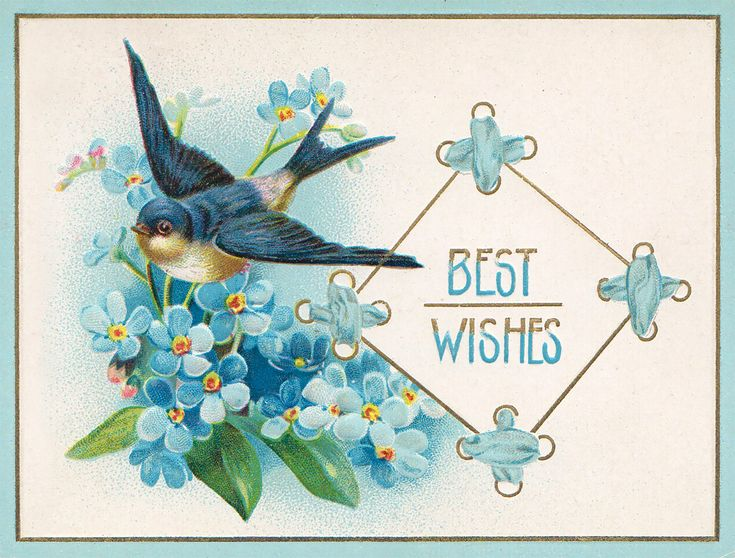 An Edwardian blue bird for you!  You can download the full sized image on my FB page  #bluebird #vintage #postcard #bird #download #free #printable