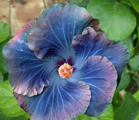 eugene s face in purple hibiscus Purple hibiscus is an exquisite novel about the emotional turmoil of adolescence,   eugene has two different masks to face public and private.