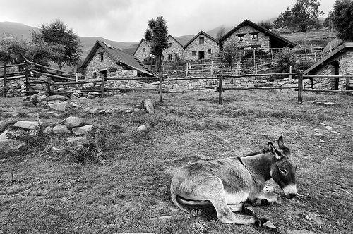 donkey - Oasi Zegna, #Italy. www.oasizegna.com