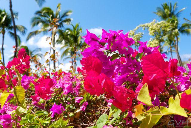 Hawaii vacation deals & news: October 8, 2015