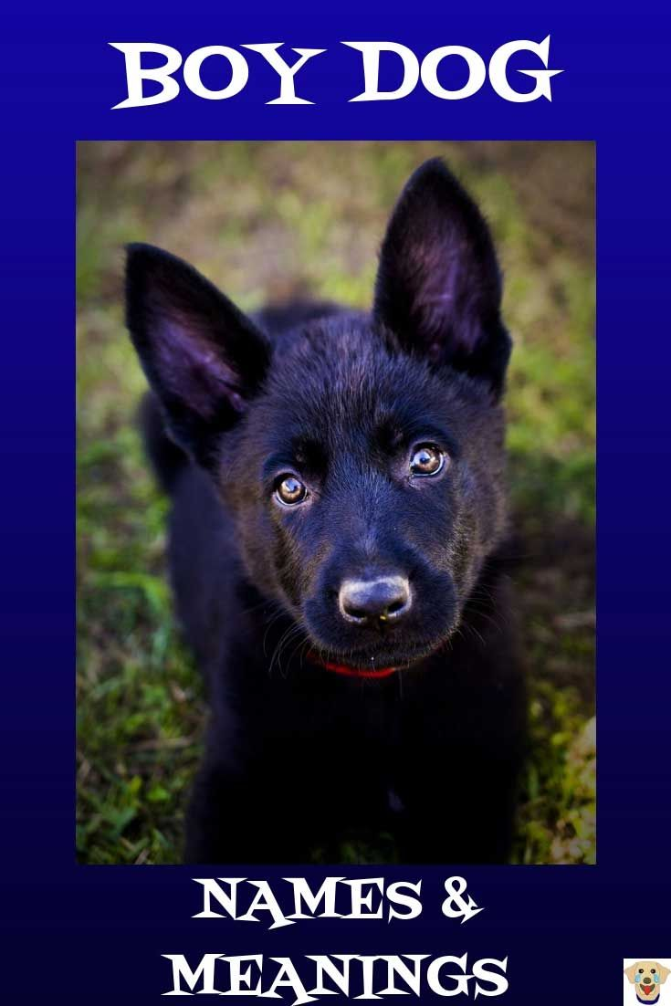 The Best Boy Dog Names List With Meanings Black German Shepherd