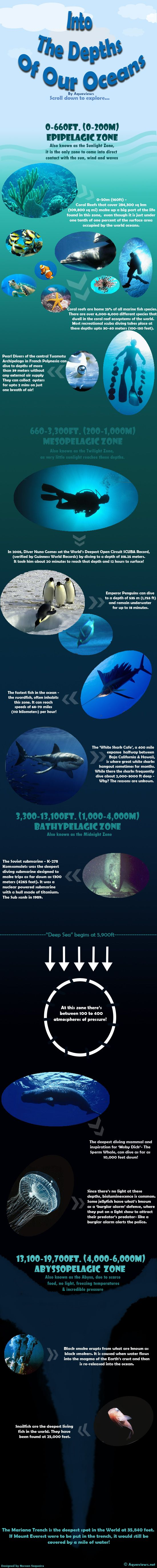 Into The Depths Of Our Oceans-Layers Of The Ocean Revealed #Infographic