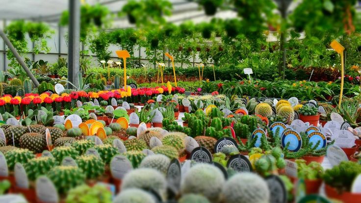 Get indoor plants and garden greenery from Melbourne's best nurseries and plant shops.