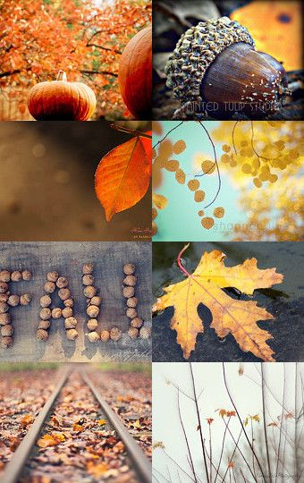 Beautiful Autumn - Fine Art Photography Finds on Etsy #fpoe