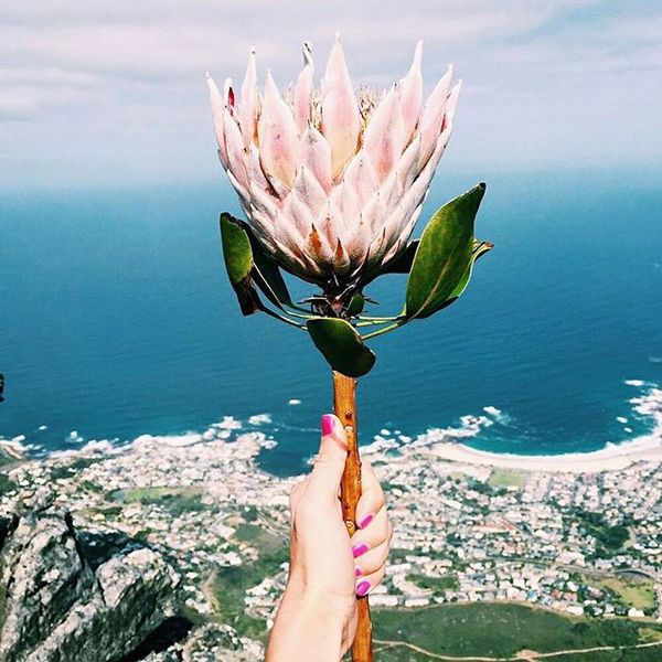 If you're in the Northern Hemisphere, the winter blues are probably starting to set in, so last week on @afarmedia, we escaped into the vibrant hues of South Africa with travel and lifestyle blogger, @cestchristine. If you're dreaming of blue skies and can't hop aboard a flight to Cape Town, foll...