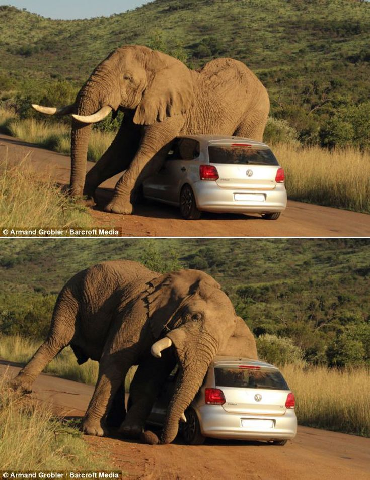 Africa | Massive bull elephant decided to scratch an itch. Photo taken by Armand Grobler, a field guide and lodge manager in the Pilanesberg National Park, South Africa