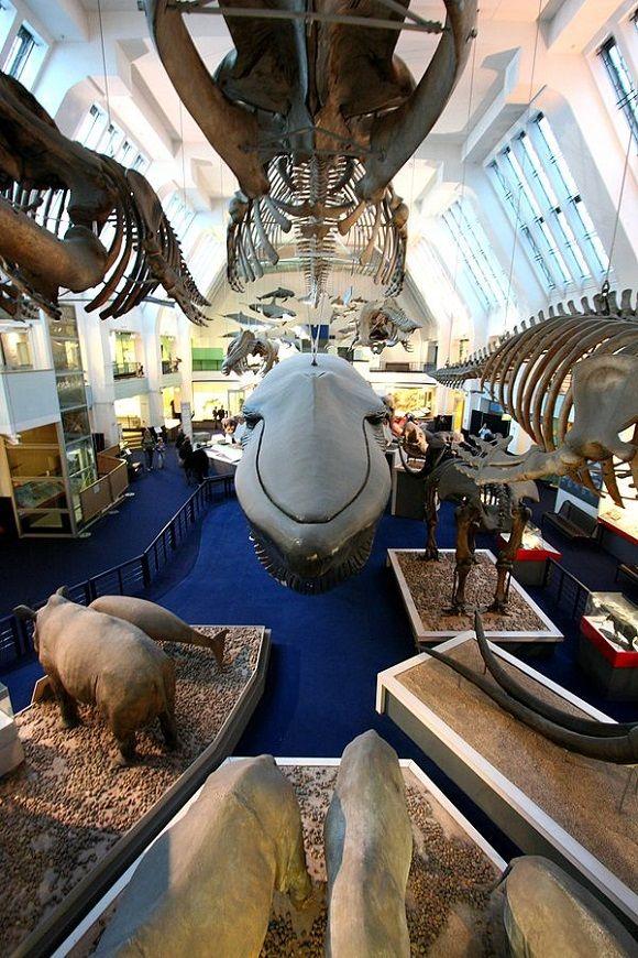 6 salas que no te puedes perder del Museo de Historia Natural de #Londres. http://www.guias.travel/blog/6-salas-que-no-te-puedes-perder-del-museo-de-historia-natural-de-londres/ #turismo #viajar