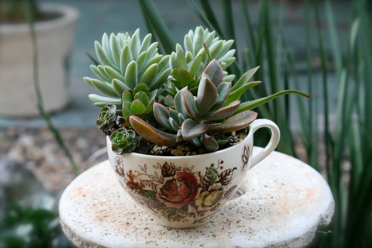 Succulents Planted in English Cottage Inspired Rustic Teacup with Floral design. $23.00, via Etsy.