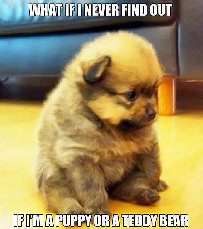 awww reminds me of teddy:)