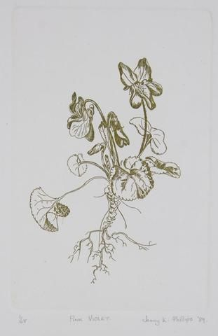 Jenny Phillips 'Pink Violet' - Etching on paper