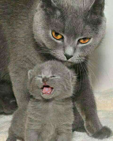 That is a face of a protective parent.