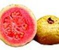 Goiaba: Rico em: vitaminas A, B1, C, fosforo, ferro, cálcio, zinco e fibras. A goiaba é uma fruta de grande beneficio para o nosso organismo, auxilia no combate as infecções, reduz o nível do colesterol, tosse, diarreia, hemorragias e ajuda no emagrecimento.