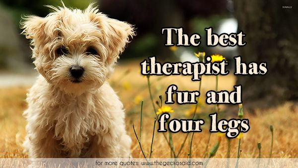 The best therapist has fur and four legs.  #animals #best #dog #four #fur #legs #quotes #therapist  ©2016 The Gecko Said – Beautiful Quotes