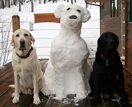 Yellow, black and Snow Labs. www.superstarpetservices.com