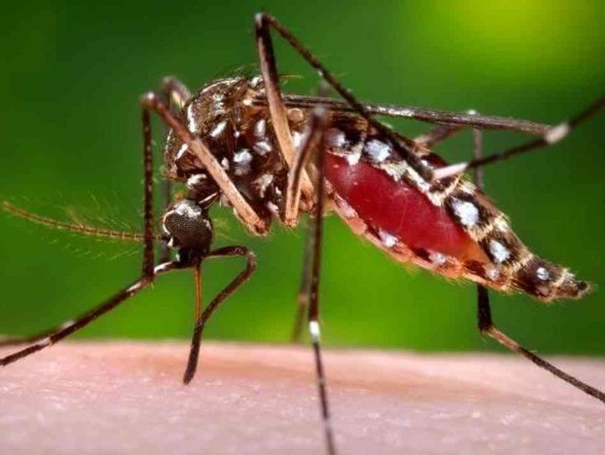 Dengue: Prevenção, Sintomas da Hemorrágica, Chikungunya e Zika