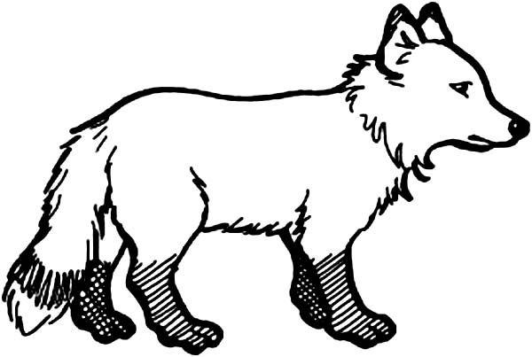 Arctic Animals Little Arctic Fox In Arctic Animals Coloring