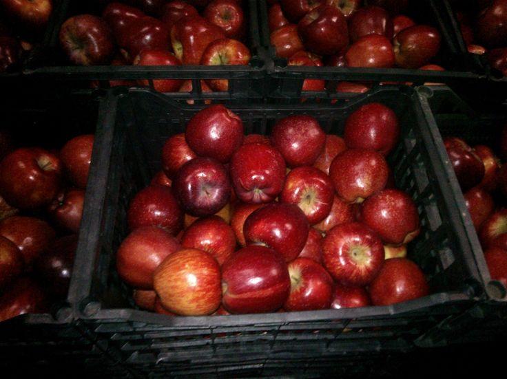 Όλα τα μήλα που διαθέτουμε παράγονται στην ορεινή περιοχή του νομού Πέλλας και τα χωράφια συγκομιδής είναι επιλεγεμένα απο τα έμεπιρα μάτια των υπευθύνων. Συλλέγονται με μεράκι απο το δίκτυο των παραγωγών μας και παραλαμβάνονται στις εγκαταστάσεις μας. Υπόκεινται σε διαλογή και συσκευάζονται με ιδιαίτερη προσοχή για να φτάσουν στον τελικό καταναλωτή φρέσκα και περιποιημένα.