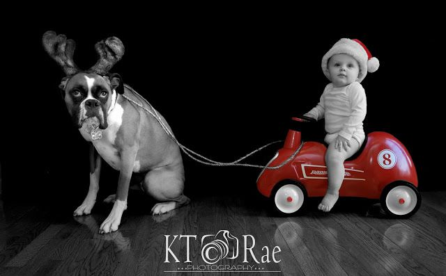 Holiday Card by KT Rae Photography Cleveland Photographer Xmas Card/ Christmas/ dog and kid xmas card