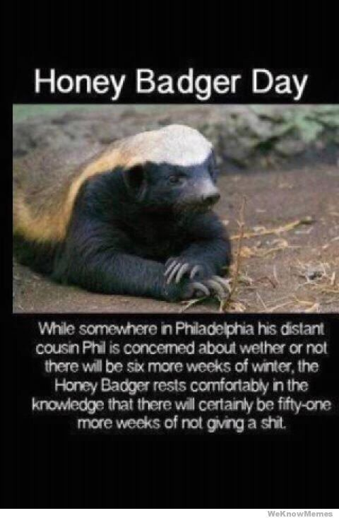 Honey badger dont give a shit - photo#33
