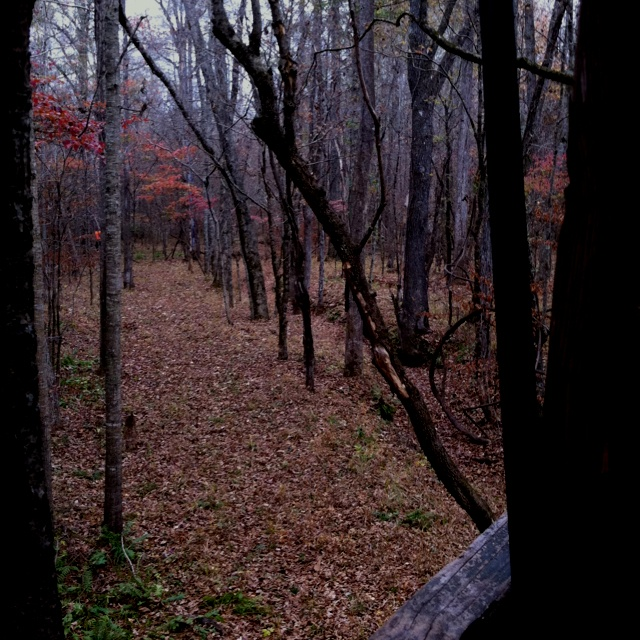 HuntingFull Drawing, Buckets Lists, Trees Stands, Favorite Places, Girls Hunting