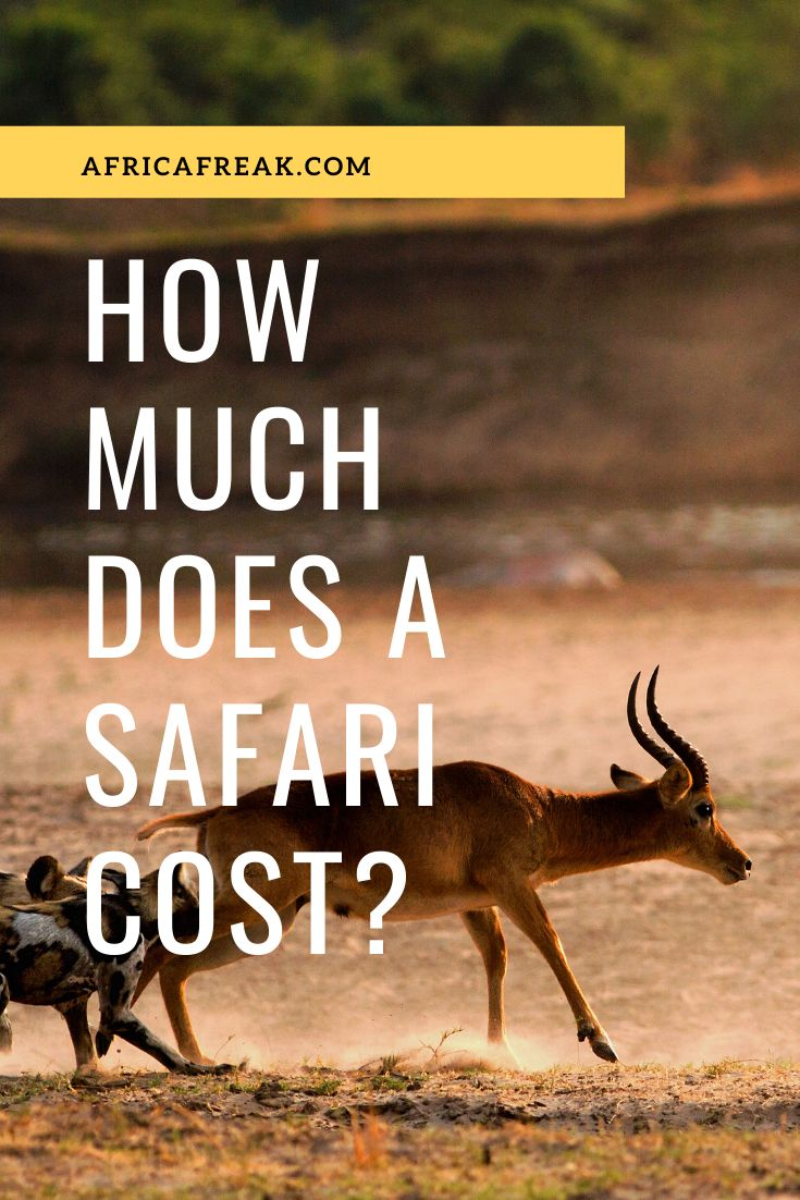 How Much Does an African Safari Cost? (and How to Make it