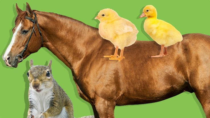 Hayvanları Öğreniyoruz | Çocuklar İçin Hayvanlar | Çiftlik ve Orman Hayv...