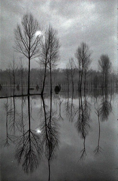 Reflections.: Atmosph Inspiration, Winter Trees, Black White Photography, Photography Beauty Nature, Beauty Place, B W Photography, Amazing Nature, Christmas Ornaments, Photography Reflections
