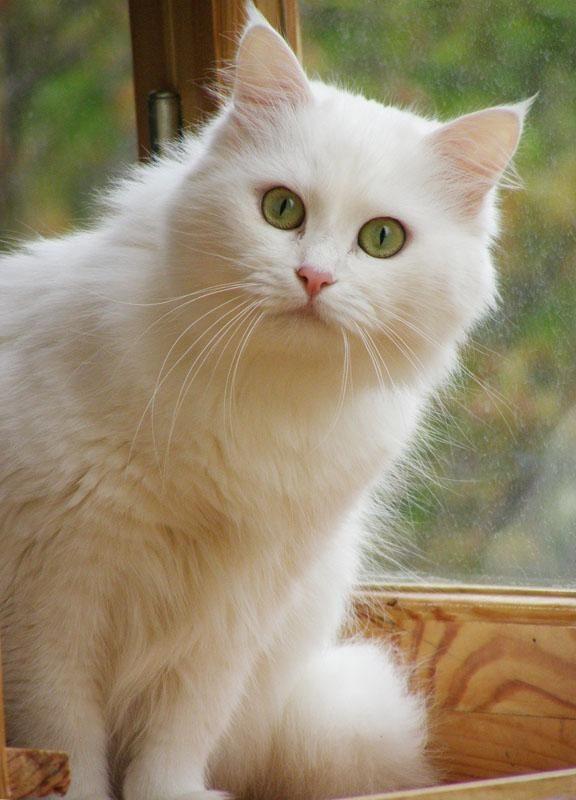 By the Window - Vitali Bonder - Pixdaus