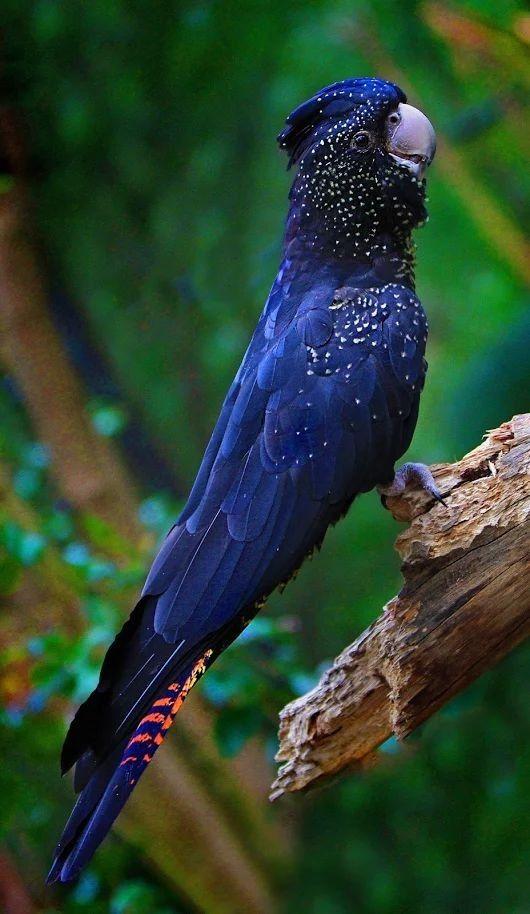 Whoa it's like it has little stars on its dark blue feathers... wonder what it is