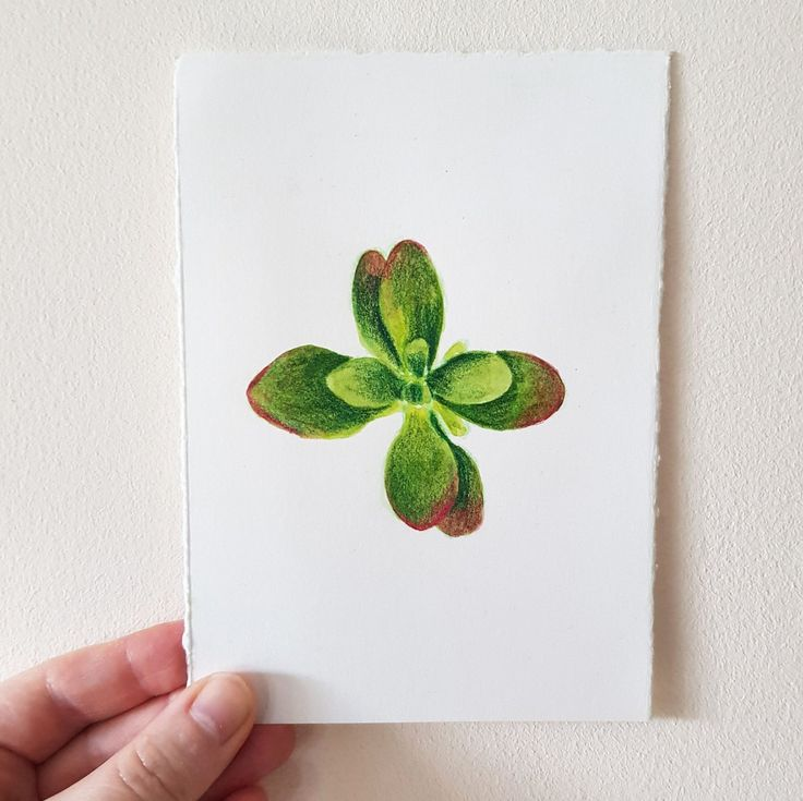 Succulent Watercolour Painting, Crassula, Money Plant, Original Art, Botanical Wall Art, Home Decor, One of a Kind – Cathryn Worrell Etsy Shop