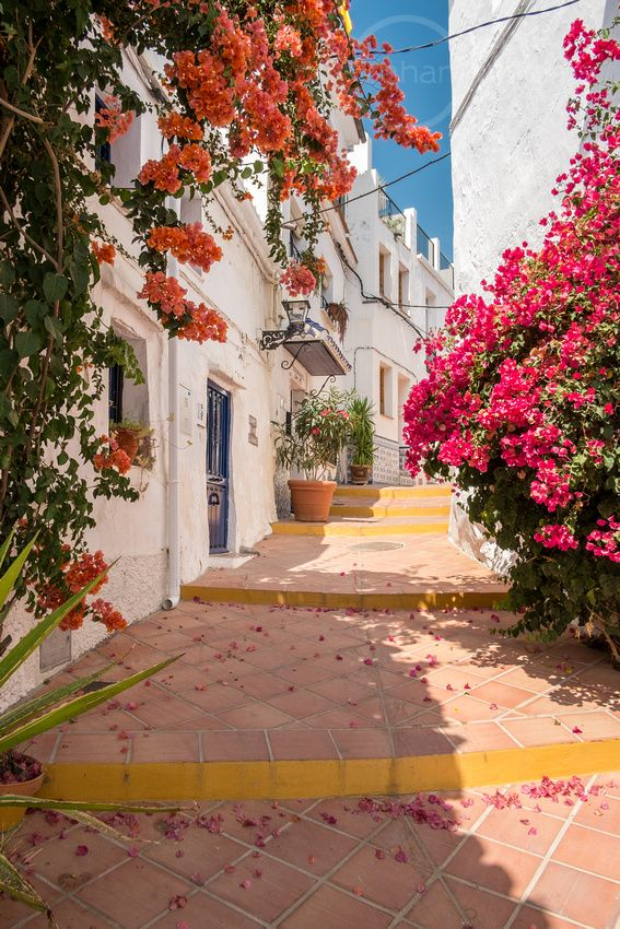 colourful climbing flowers up sides of white buildings on cobbled street in torrox andalucia spain