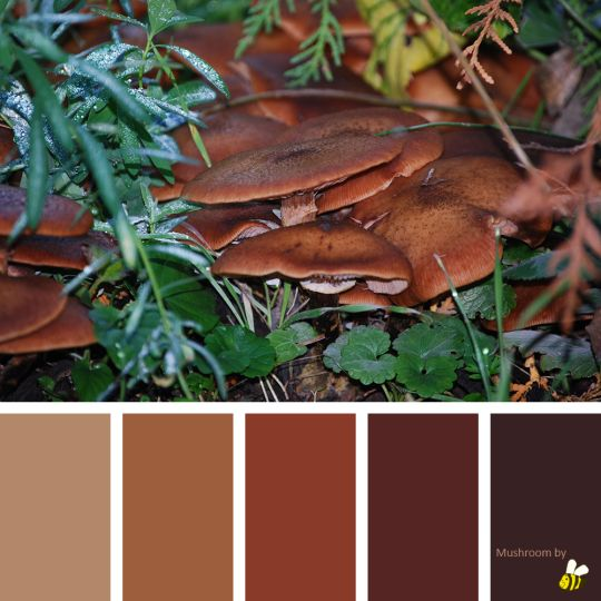 Mushroom palette by BeeBox (ONLY FOR PERSONAL USE!)