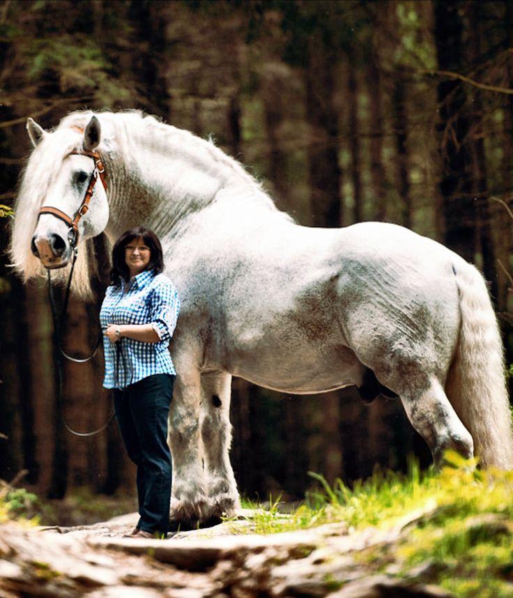 Percheron | Bettina Niedermayr Pferde | Mensch & Pferd | To show how big he is...we think 19-20 hands