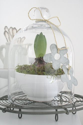 This would work great with the Tall Glass Dome (http://bit.ly/xzYzC0) and the middle or upper basket from the French Wire Tiered Stand (http://bit.ly/zRL0Do) -- could even turn wire basket upside down for added height and interest.