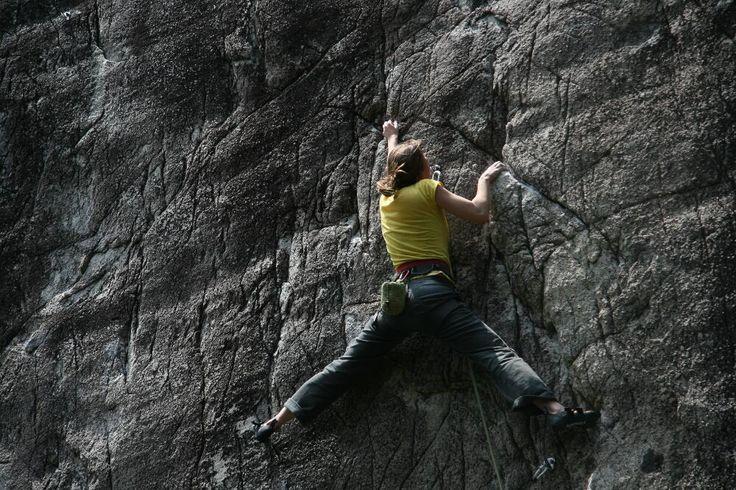 FLINGUS CLING- Pet wall, 12b sport