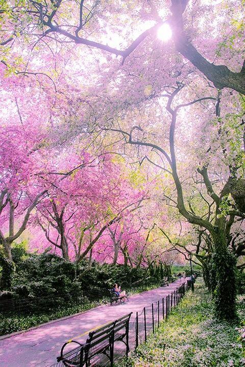Central park au printemps | paysages de rêves in 2019 | Conservatory garden, Beautiful places, Places