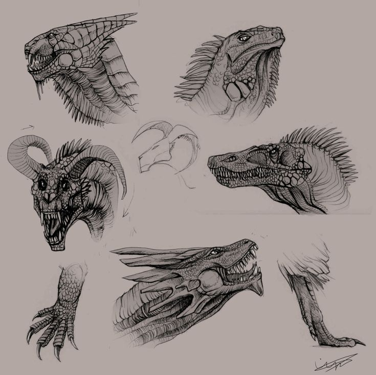 how to draw a lizard dragon