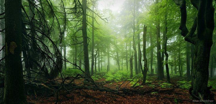 500px / Lush Forest by Kilian Schönberger
