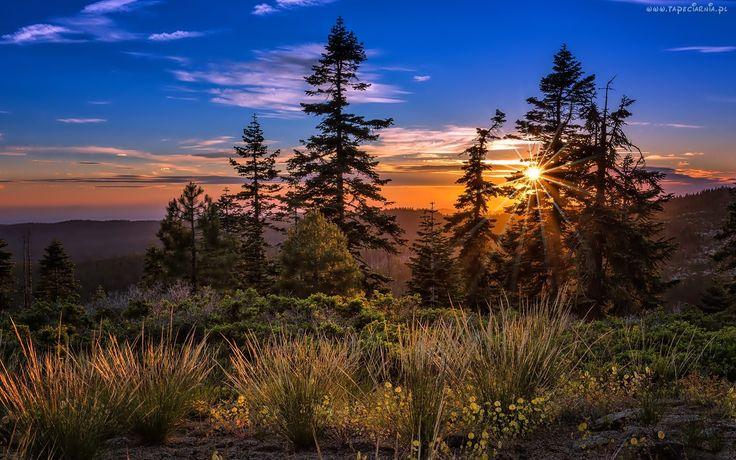 Drzewa, Krzewy, Promienie Słońca, Zachód słońca