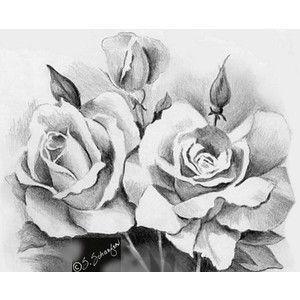 Rosen bleistiftzeichnung  15 besten Draw Bilder auf Pinterest | Drawing ...