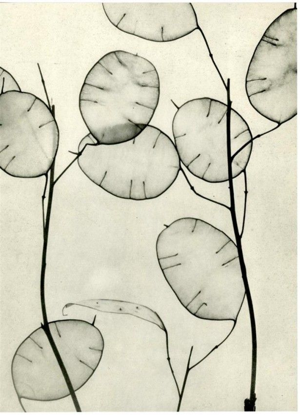 Willy Zielke(German, 1902-1989)  Composition #103   1930  photogravure